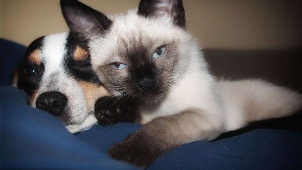 Un perro y un gato (imagen referencial) - Sputnik Mundo