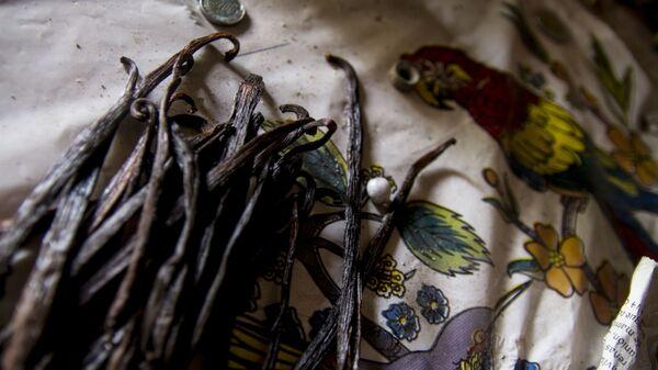 Vainilla seca dentro de la casa de la familia García-Castaño, Papantla, Veracruz - Sputnik Mundo