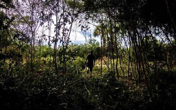 Miembro de la familia García-Castaño al amanecer inicia sus actividades en los campos de vainilla en El Chote - Sputnik Mundo