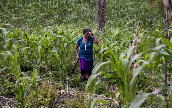 Miembro de la familia García -Castaño regresa después de trabajar en el campo en El Chote, Papantla, Veracruz - Sputnik Mundo