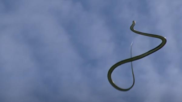 Una serpiente voladora - Sputnik Mundo