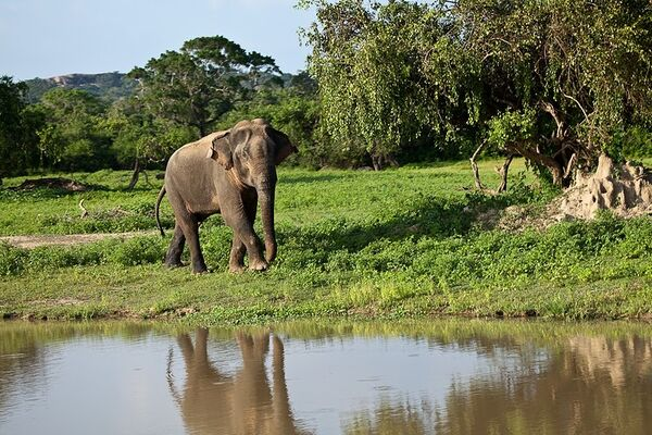 Elefante - Sputnik Mundo