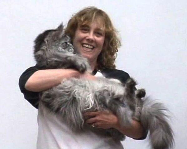 Gato doméstico de Estados Unidos entra en Libro Guinness por medir más de 123 cm - Sputnik Mundo
