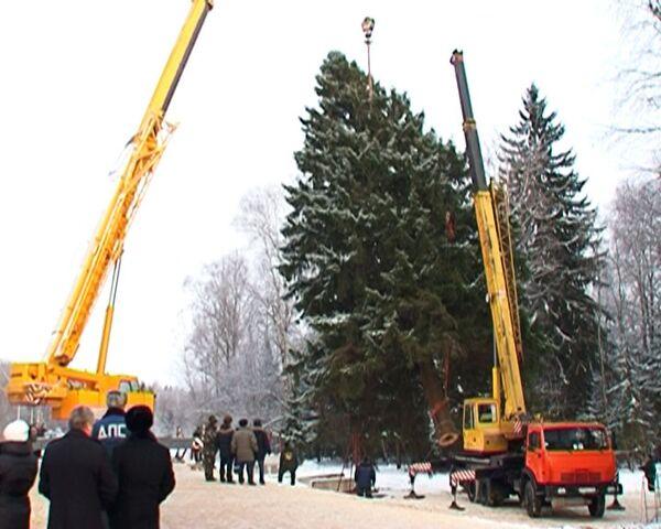 Tala del abeto que protagonizará el Año Nuevo 2011 en Kremlin_spa - Sputnik Mundo