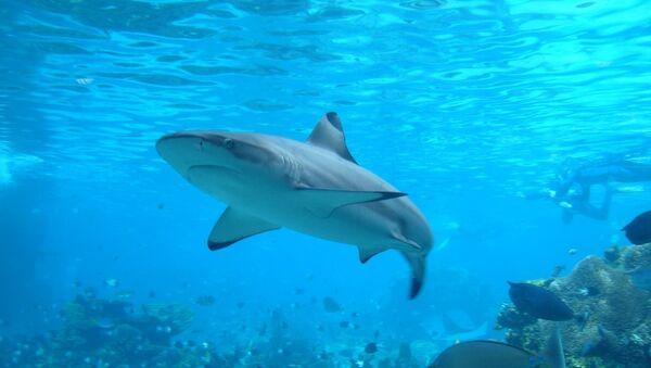 Experto ruso dice que los tiburones no son la amenaza más grande de turistas - Sputnik Mundo