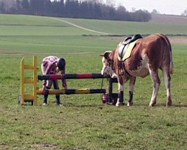 La vaca Luna puede saltar vallas como un buen caballo - Sputnik Mundo
