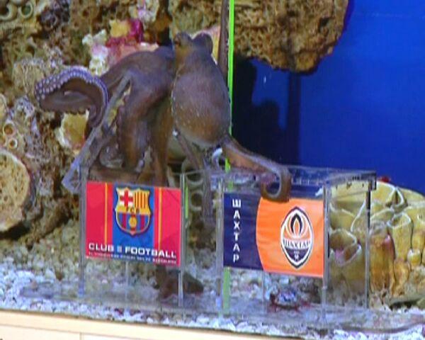 El pulpo Pávlik pretende ser el oráculo del campeonato de Europa 2012 - Sputnik Mundo
