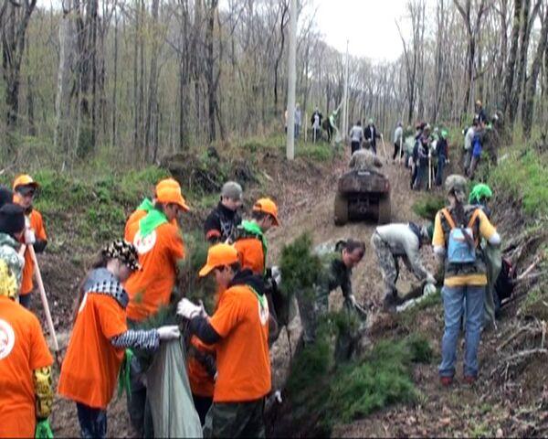 Voluntarios plantan 30.000 cedros para preservar tigres y leopardos siberianos  - Sputnik Mundo