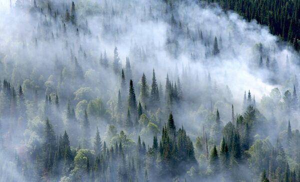 Lucha contra incendios forestales en el Territorio de Krasnoyarsk  - Sputnik Mundo