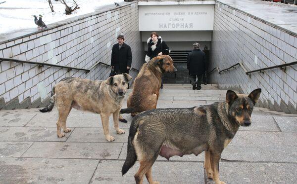 Los perros. Archivo - Sputnik Mundo