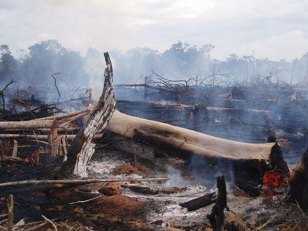 La temperatura de los océanos da pistas sobre los incendios forestales en el Amazonas - Sputnik Mundo