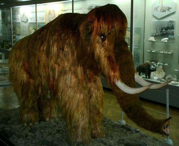 Las posibilidades de los genetistas de clonar a un mamut - Sputnik Mundo