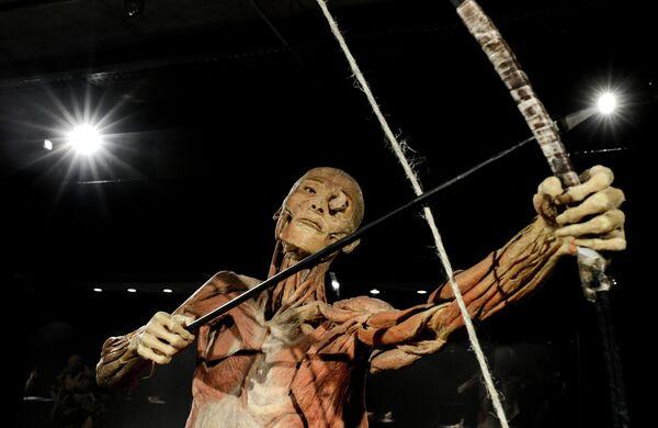 """La exposición """"Nuestro cuerpo. El universo dentro"""" llega a Moscú - Sputnik Mundo"""