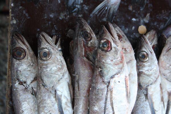 """The Financial Times precisa que """"Chile saldrá beneficiado de las medidas restrictivas rusas contra la importación de pescado"""" - Sputnik Mundo"""